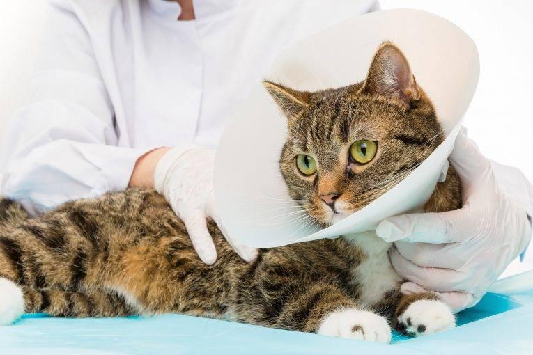 Как ухаживать за кошкой после стерилизации: советы и рекомендации
