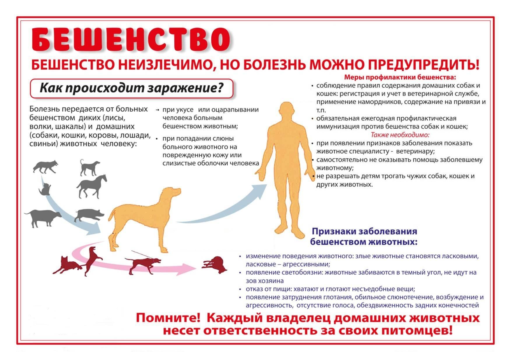 Бешенство у кошек: симптомы, лечение и профилактика опасного заболевания