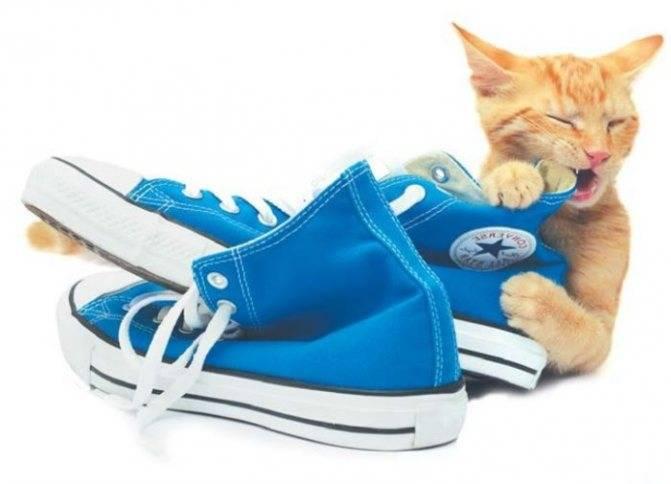 ᐉ как воспитать котенка ласковым и спокойным? - zoomanji.ru