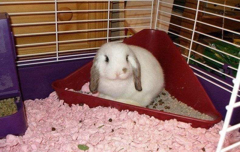 Туалет для кроликов: как можно приучить кролика к лотку и какие могут возникнуть сложности в этом процессе