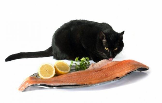 Можно ли давать кошкам рыбные консервы, какой рыбой кормить кошку?