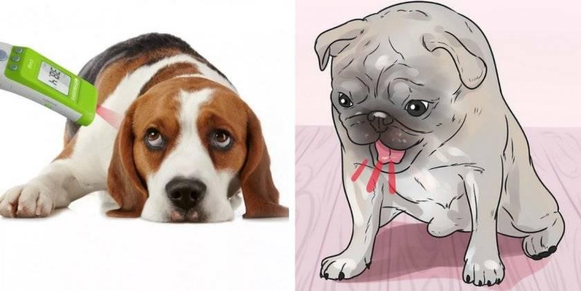 Кашель у собаки: о чем должен знать владелец