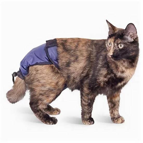 Подгузник для кошек — купить или сделать своими руками