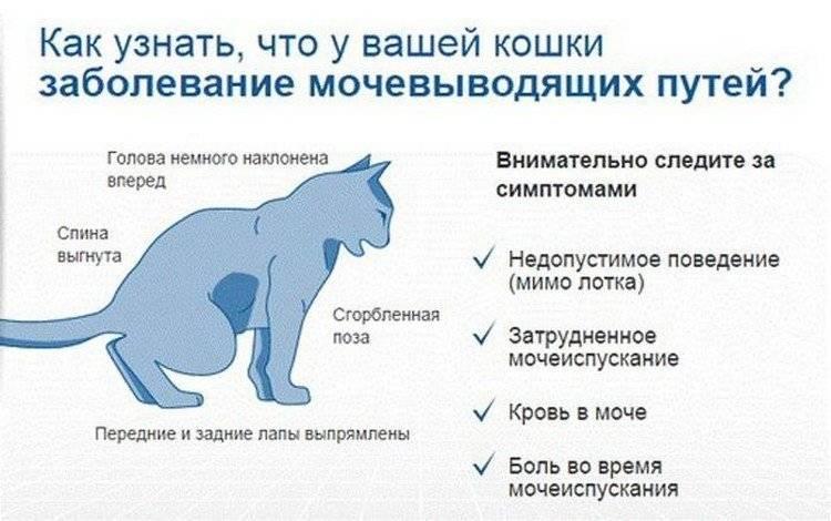 Обезвоживание у кота: что делать в домашних условиях