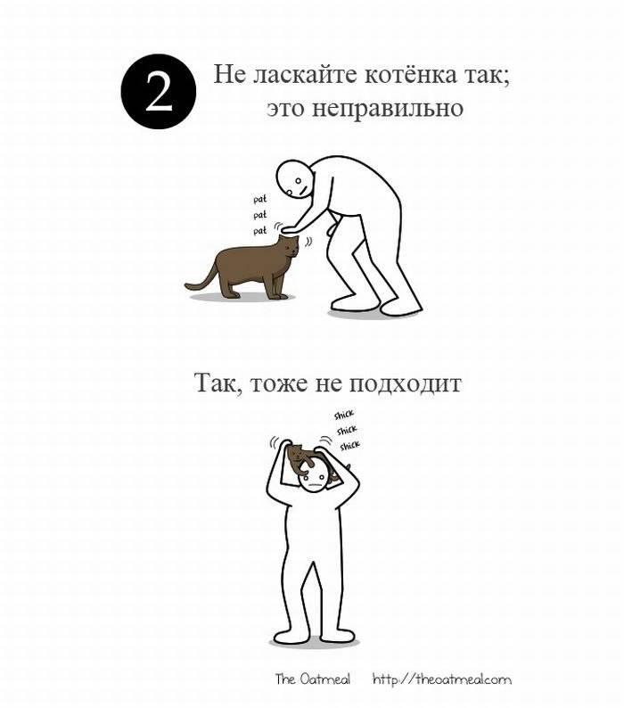 Женщины как кошки любят их гладят. как правильно гладить кошку, чтобы она была счастлива. о поглаживаниях котов посторонними - умный доктор