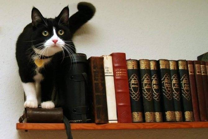 Скучают ли кошки по хозяевам? | про кошек | яндекс дзен