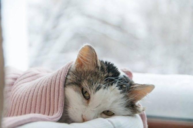 Причины и симптомы простуды у котов и кошек, лечение простудных заболеваний в домашних условиях