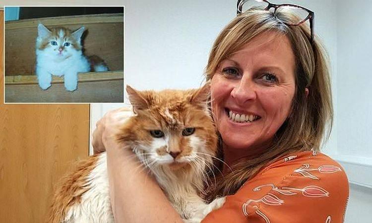 Самые старые коты и кошки в мире, породы котов-долгожителей