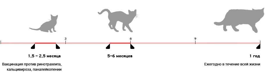 Когда котенку давать от глистов: какие таблетки, что дать, как дать,в каком возрасте?