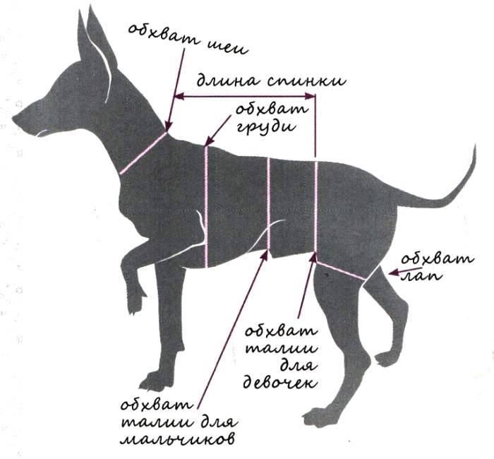 ᐉ холка у собаки: где находится и как правильно измерить - kcc-zoo.ru