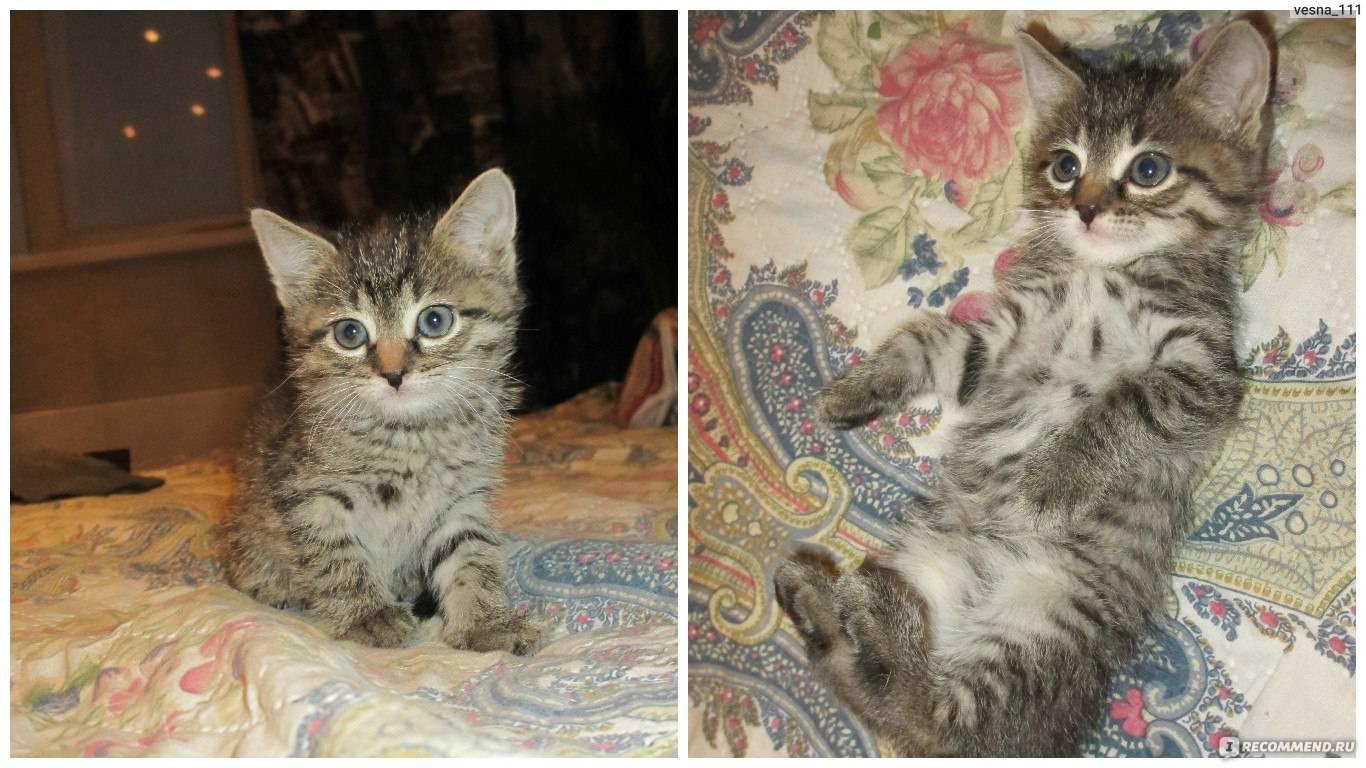 Описание и условия содержания беспородных котов