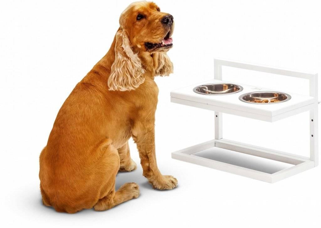Миски для собак (34 фото): как выбрать интерактивные кормушки и миски-непроливайки, складные и двойные, керамические и металлические миски для больших собак и щенков?