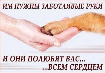 Алиментный щенок - что это? право на алиментного щенка
