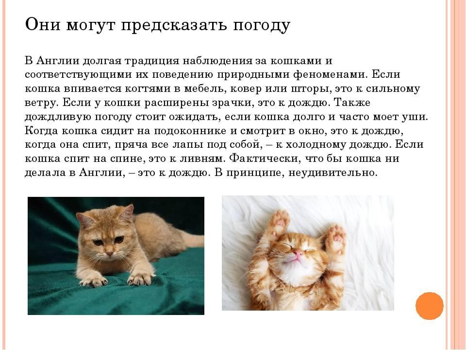 Можно ли оставить кошку на время отпуска? на сколько можно оставлять кошку в одиночестве кошка одна в квартире сколько дней. - здоровье сердца