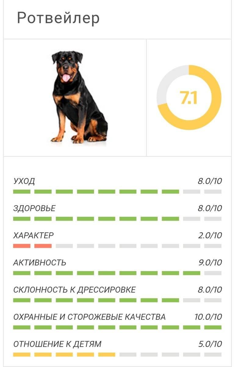 Самые дорогие породы собак — топ 15