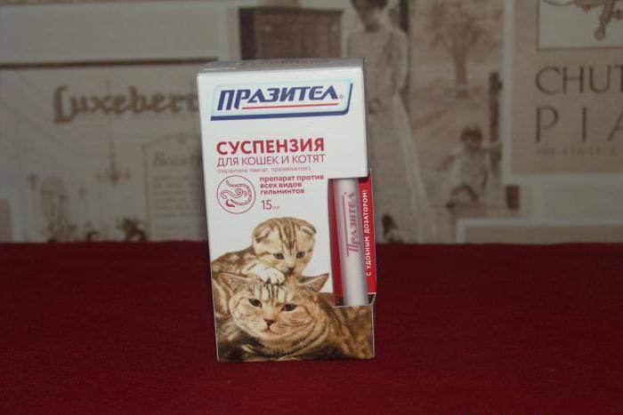 Как лечить глисты у кошки. глисты у кошек: симптомы и лечение
