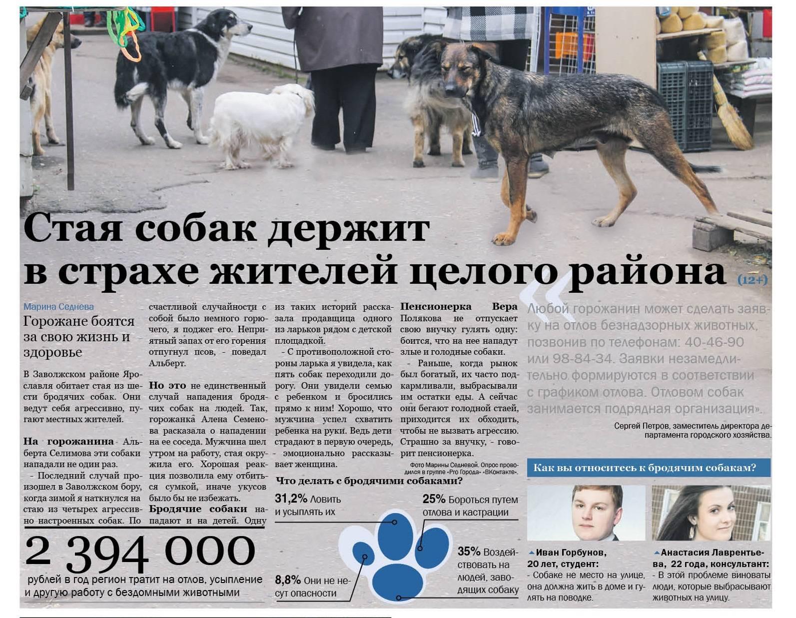 Как жители москвы могут помочь бездомной собаке — рекомендации на реальном примере | волонтеры приюта щербинка  в защиту бездомных животных, сообщество доброты