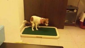 Как приучить собаку к кличке за один день: пошаговая инструкция
