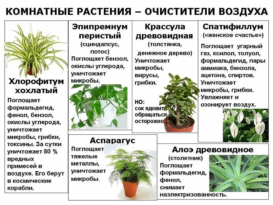 48 ядовитых комнатных растений, которые могут убить