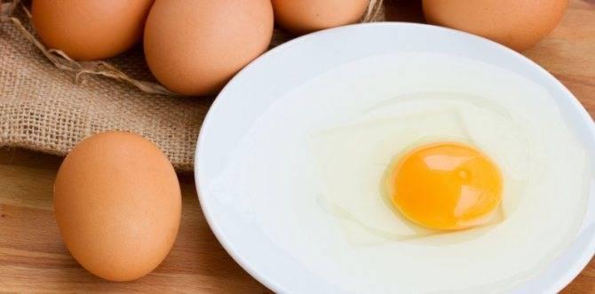 ᐉ можно ли щенку давать вареное яйцо? - zoo-mamontenok.ru