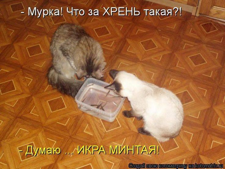 О чем думают кошки и думают ли вообще?