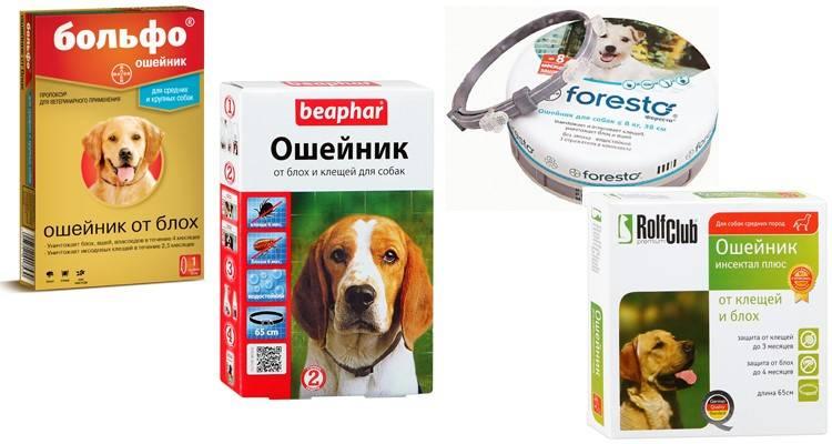 Ошейник от клещей для собак - действие биологических, ультразвуковых и химических моделей
