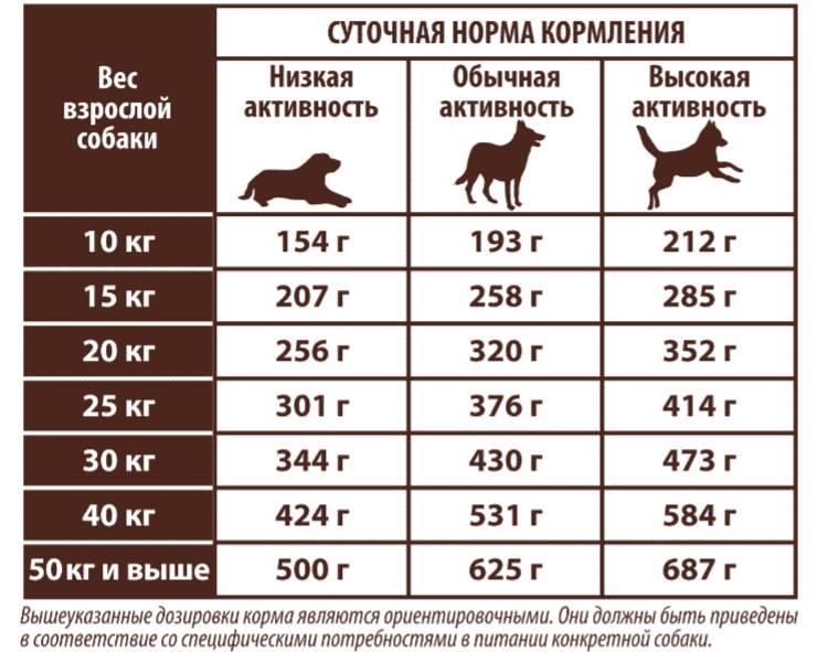 Чем можно кормить лабрадора в домашних условиях: популярные виды кормов