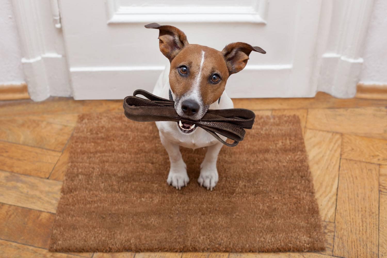 10 пород собак для неопытных владельцев