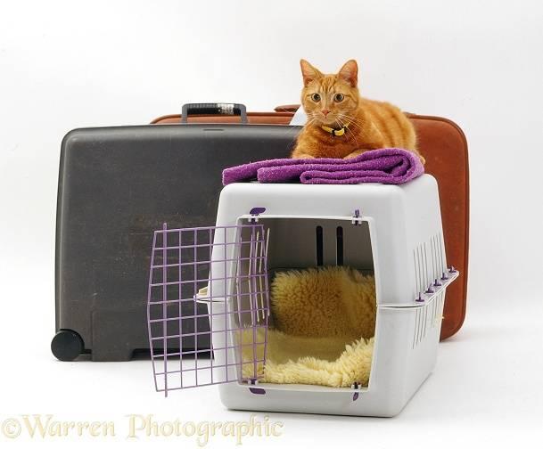 Как оставить кота дома на время отпуска без присмотра