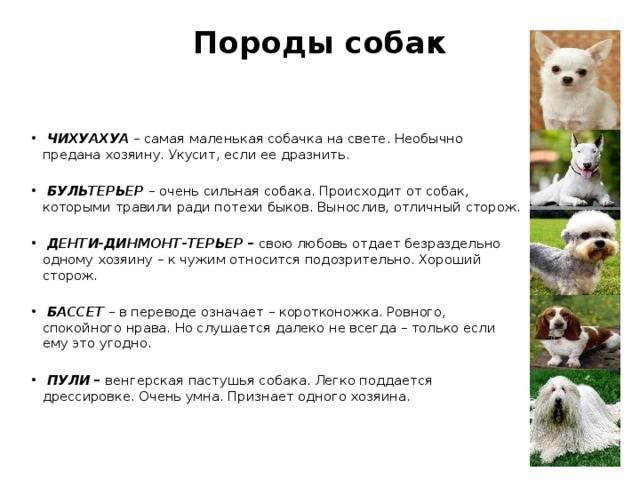 Образец верности – самые преданные породы собак в мире: топ 10