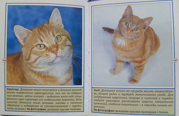 Как определить пол кошки: 7 шагов (с иллюстрациями)