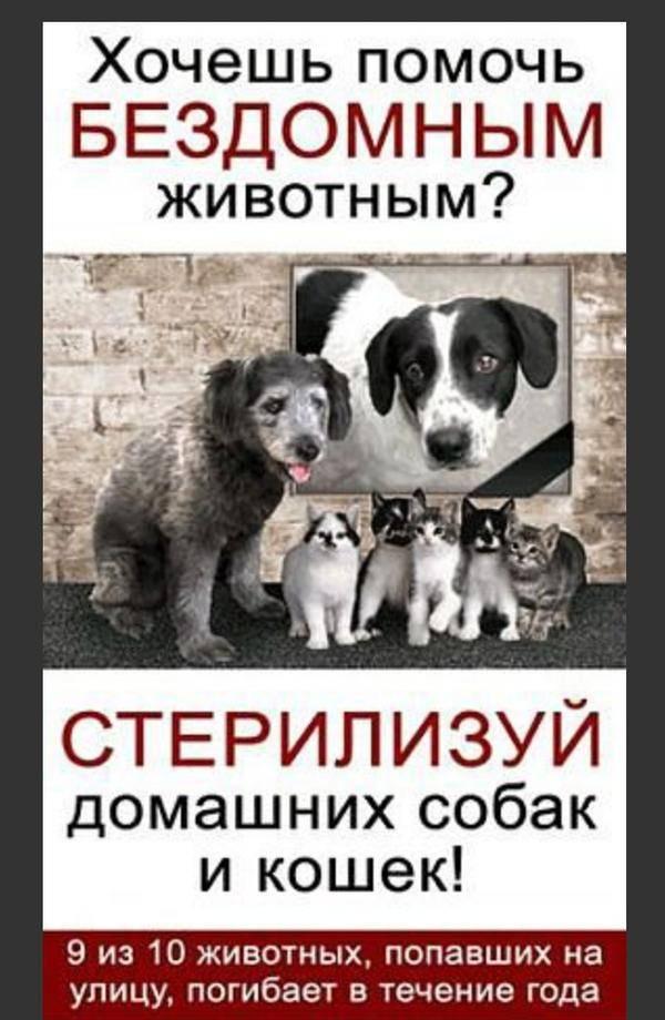Я смогу: как пристроить бездомных щенят?
