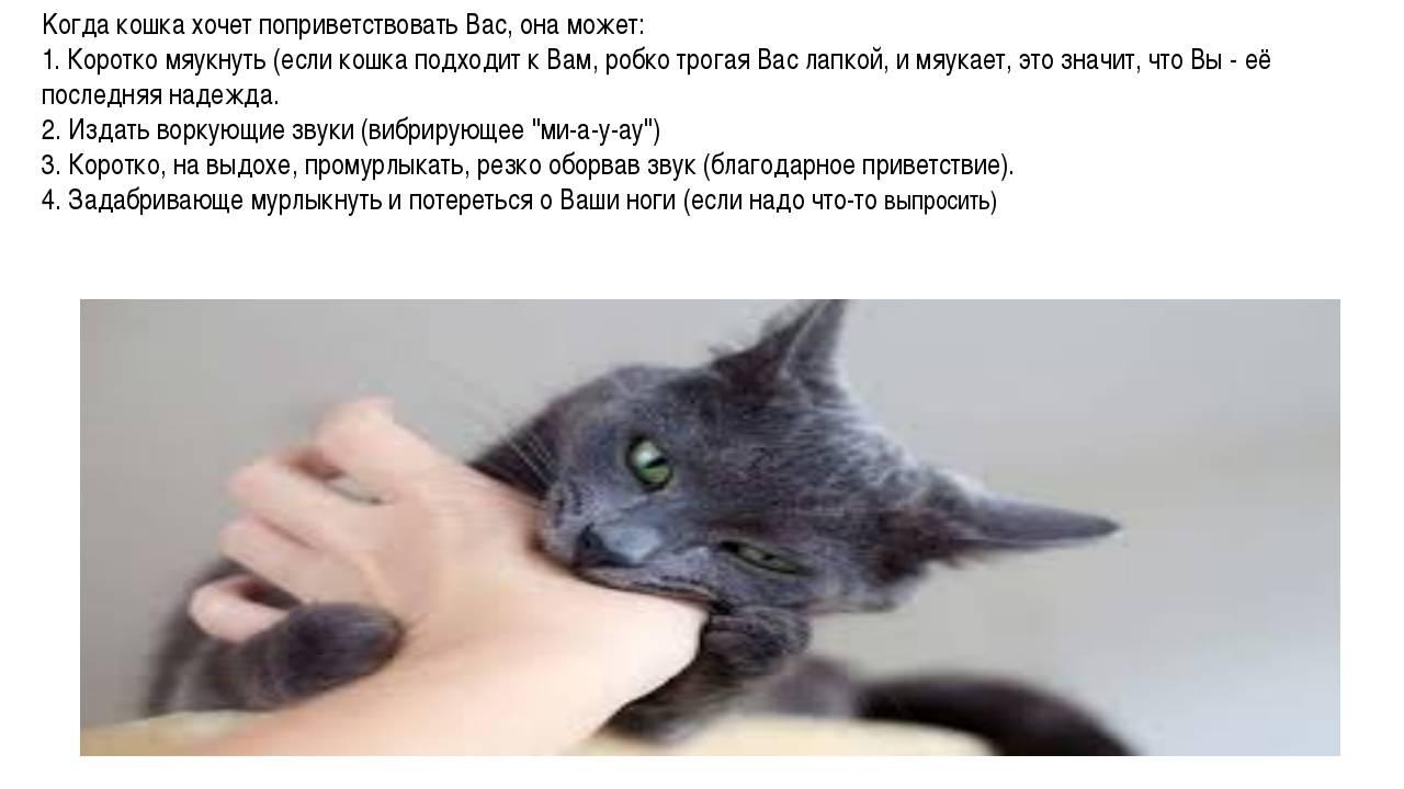 Как кошка переносит котят: негативные последствия