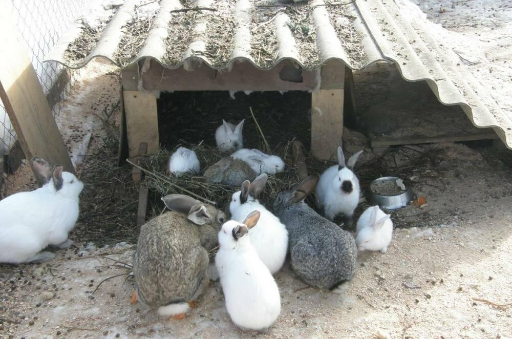 Вольер для кроликов: как сделать своими руками