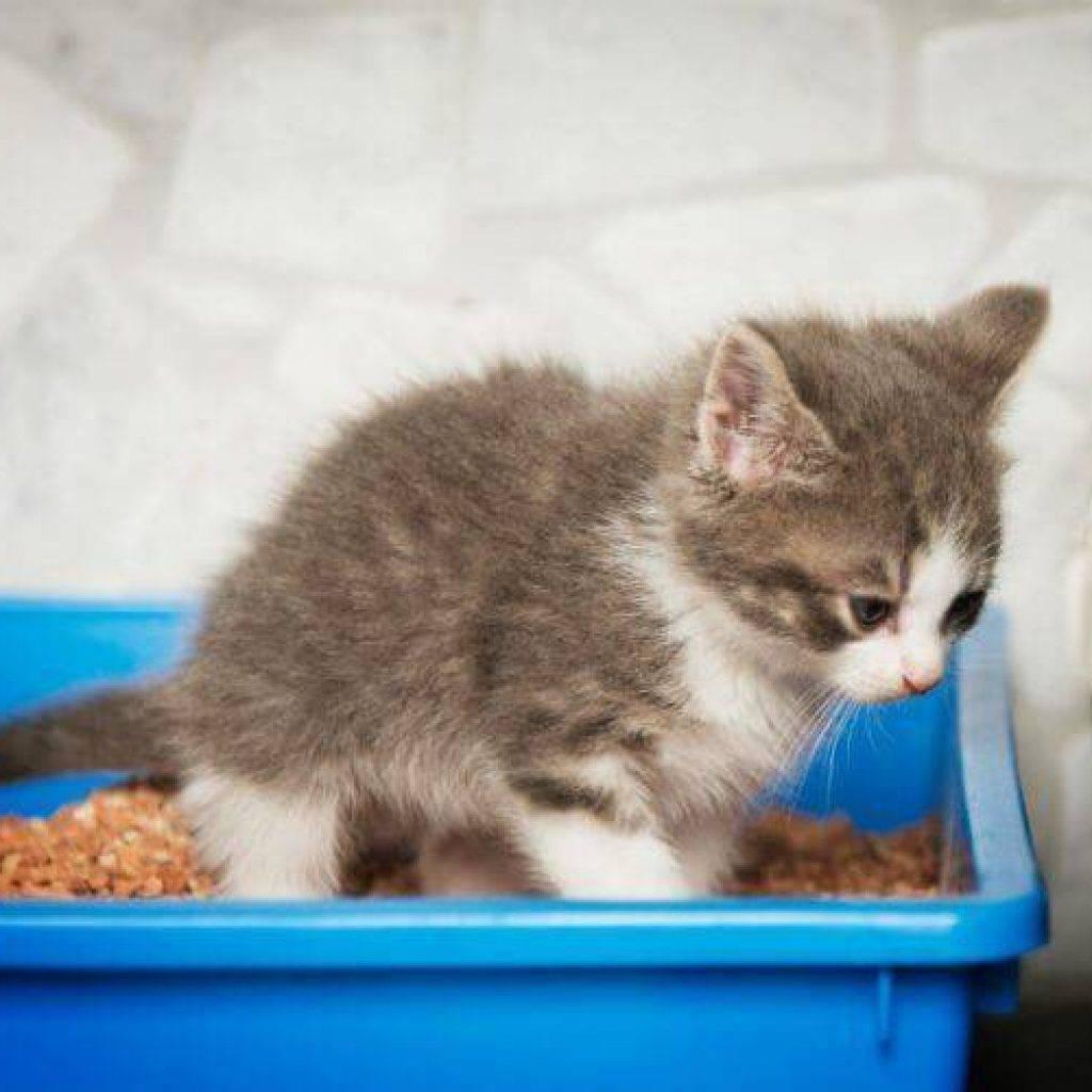 У кошки понос: что делать в домашних условиях