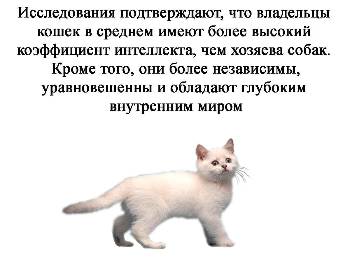 3 главных причины завести вторую кошку | приключения натуралиста | яндекс дзен