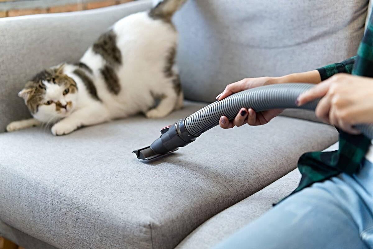 Что боятся кошки? 6 вещей кошки боятся и как помочь им преодолеть эти страхи - поведение кошки 2020