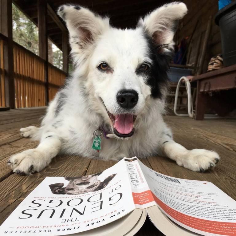 Самые лучшие собаки для детей и семьи – активные, добрые, игривые и другие породы