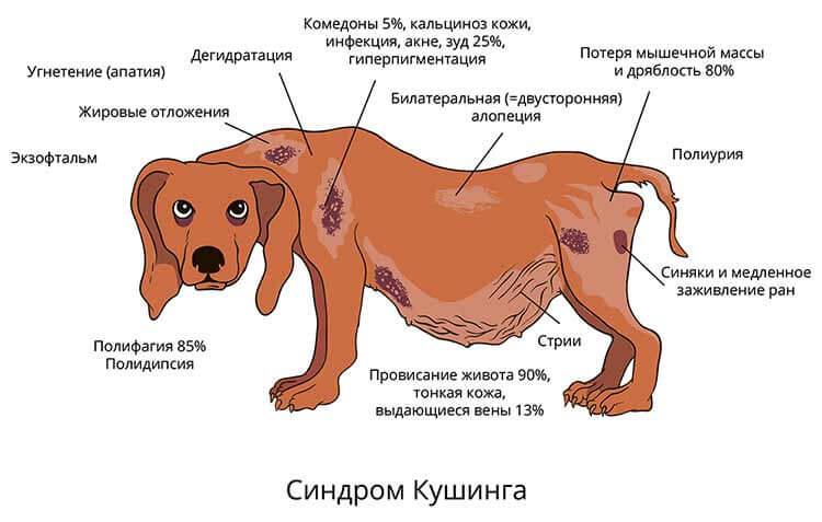 Кашель у собаки лечение, причины, диагностика и профилактика