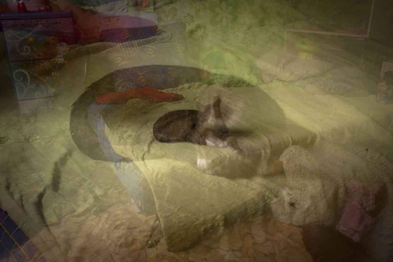 10 признаков того, что дух вашего умершего животного пытается с вами связаться  :: инфониак