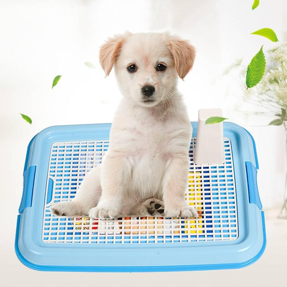 Быстрый порядок приучения щенков к туалету на пеленке и лотку в квартире