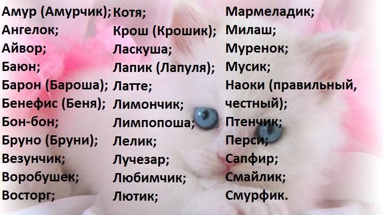 Клички для персидских кошек и котов