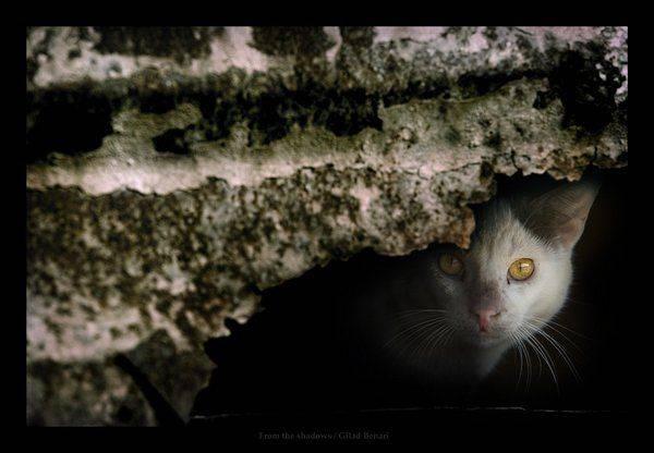 Почему кошка прячется в темные места почему кошка прячется в темные места