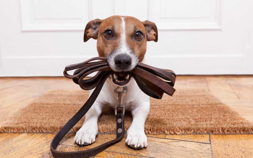 Почему от собаки пахнет псиной: главные причины и способы их устранения