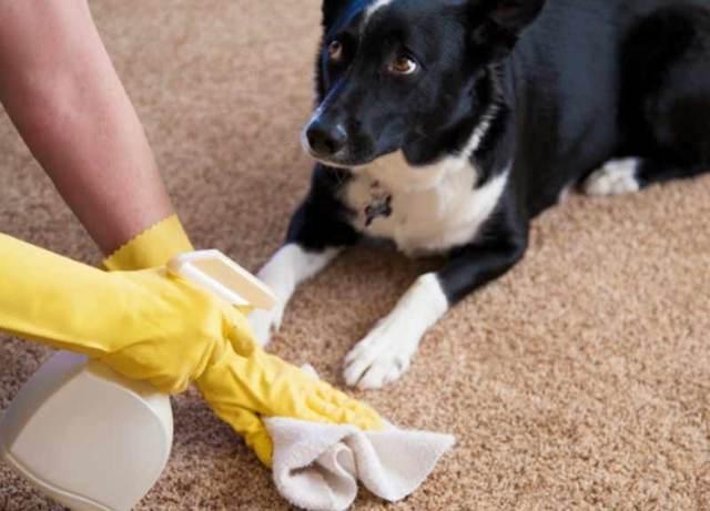 Причины мочеиспускания собаки или щенка на кровать: что делать в такой ситуации
