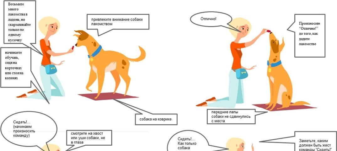 Как научить собаку команде Фас в домашних условиях