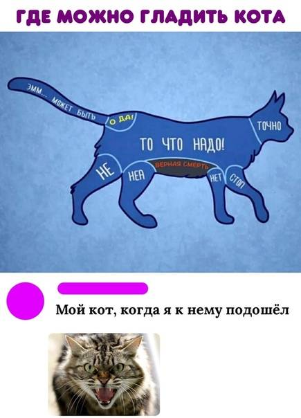 Как правильно гладить кошку: советы из сети - лайфхакер