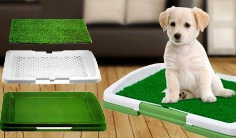 Как приучить собаку к лотку | взрослую и щенка