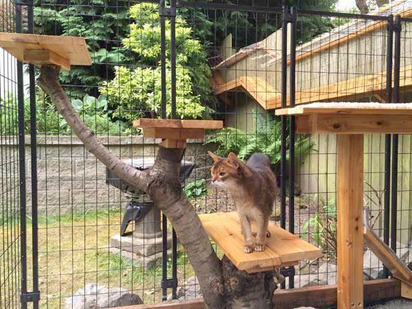Вольер для кошки: как сделать клетку самостоятельно, пошаговая инструкция
