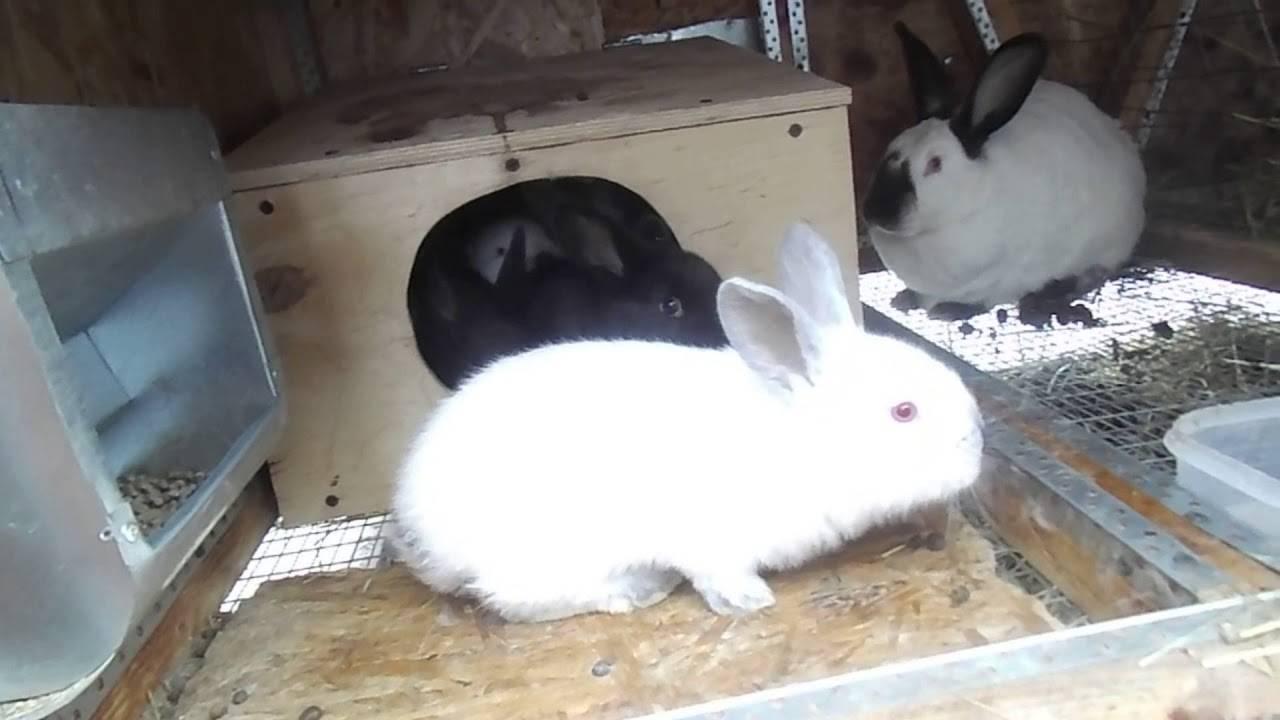 Беременность у кроликов: симптомы, сроки и уход